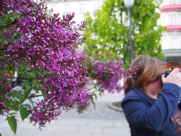 ... während Reisebloggerin Janett & ich uns beim abendlichen Spaziergang (bis weit nach 22.00 Uhr ist es hier während der Sommermonate noch hell!) uns am aufblühenden Fliederduft erfreuen.