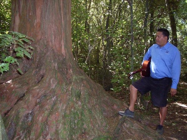 Zu Besuch im Urwald rund um Kaikoura und diesem Baumriesen hier, dem wir einen kurzen Moment der Andacht und des Respektes zollen.