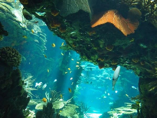 """... oder einfach diese bunte Farben- & Fischpracht hier. """"Wie ein Bildschirmhintergrund"""", so sieht's hier im Oceanario aus, stellen wir schmunzelnd fest."""