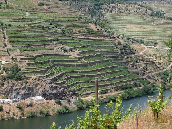 Unglaublich sauber und gepflegt sind hier die renommierten Weinterrassen entlang des Flusses angelegt ...