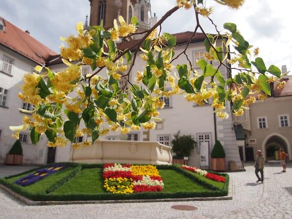 Aufblühen im Innenhof des Stift Klosterneuburg.