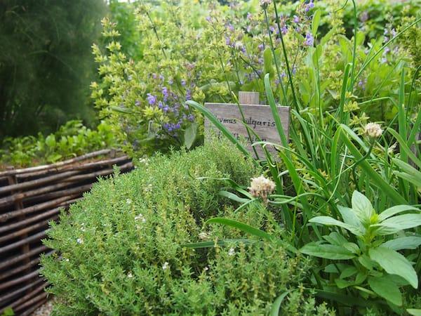 """... wie kein Zweiter kennt er jede einzelne seiner Pflanzen, Kräuter und Blumen """"persönlich"""", gemeinsam mit seinem Sohn bewirtschaftet er die Stiftsgärten von Klosterneuburg."""