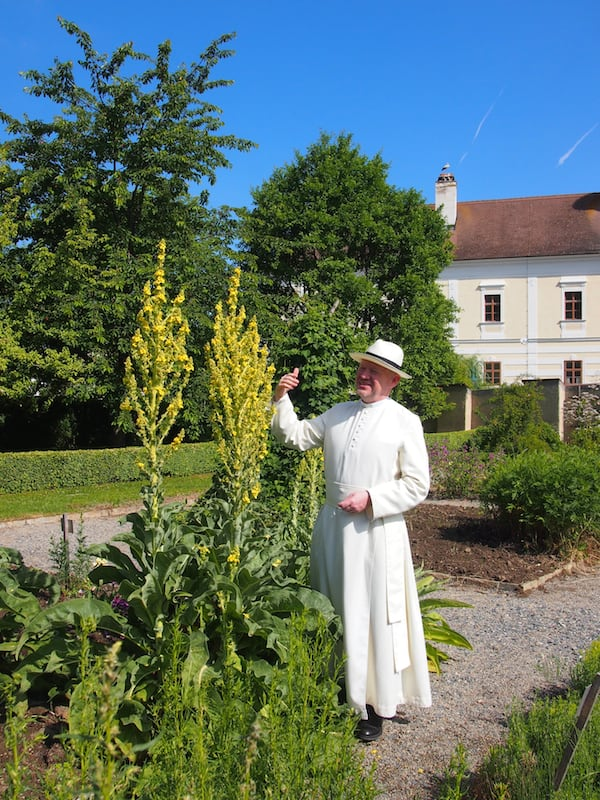 """Hier hat die Seele Platz zum Wachsen: Blick auf eine imposante Königskerze im Garten. """"Nicht fragen, 'Wofür bist Du gut?', sondern die Pflanze lieber betrachten und überlegen, 'Wobei kannst Du mir helfen?', teilt uns Kräuterpfarrer Benedikt seinen Zugang mit."""