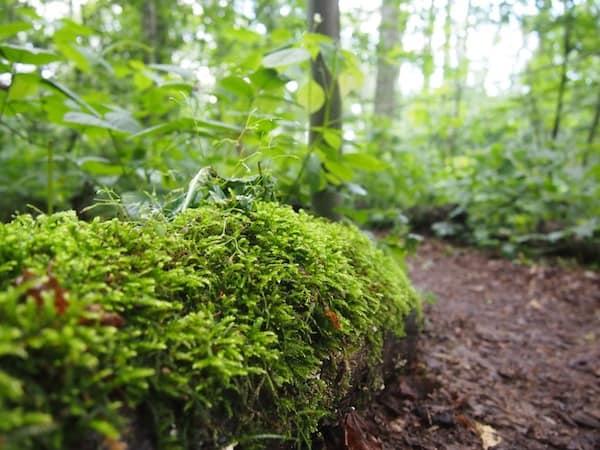 Beim anschließenden Spaziergang durch den Kletterwald selbst tanke ich Energie ...