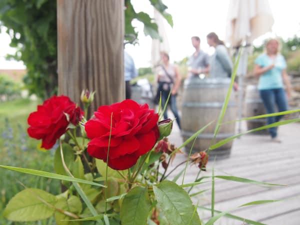 """Kurz vor dem internationalen Musikgenuss """"gönnen"""" wir uns noch eine Führung durch die Weingärten & Erlebniswelt der Winzer Krems - Sandgrube 13 ..."""