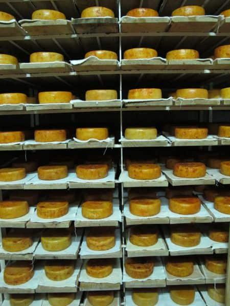 Schafskäse am Reifen – hier erhalten die Laibe durch ihre Lagerung das richtige Aroma