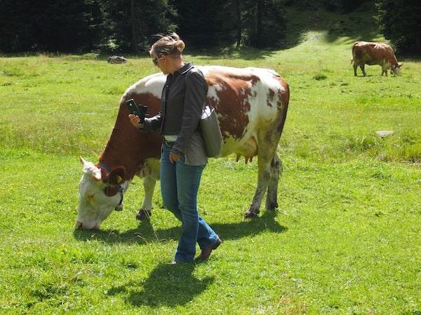Perfekt für Kuh-Selfies! ;)