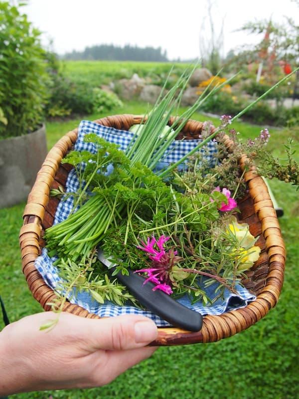 Die Ankunft bei Doris Schreiber sieht in etwa so aus: Gleich wird uns der frisch geschnittene Kräuter- & Blumenkorb unter die Nase gehalten, welche wir später in unserem Suppentopf und auf den Tellern wiederfinden!