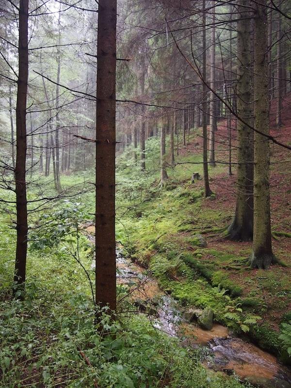 Los geht's am Weg entlang der Lainsitz: Der erste Aufstieg durch den Wald ...