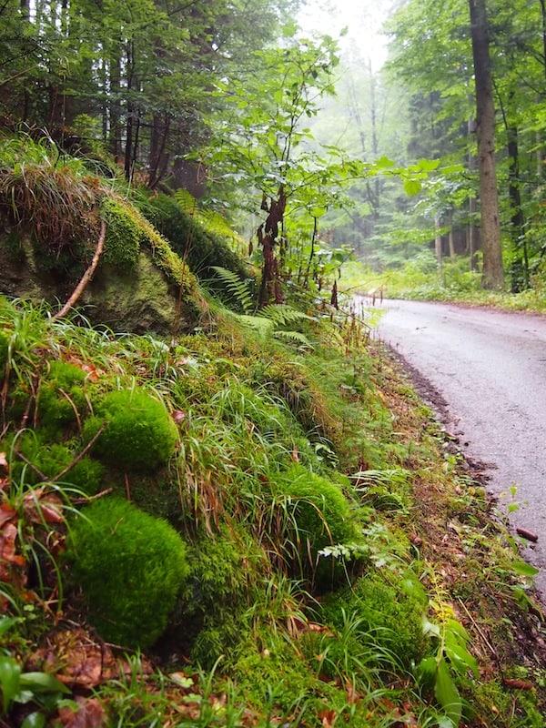 ... lässt auf- und durchatmen vor so viel GRÜN & wunderschöner Natur!