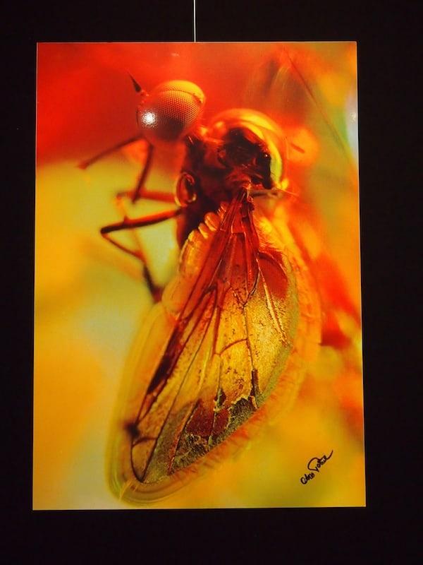 """... ebenso wie diese """"Zeitgenossen"""" hier: Fotografien 40 Millionen Jahre alter Insekten, sogenannte """"Inklusen"""" im Bernstein sind hier ausgestellt. WOW!"""