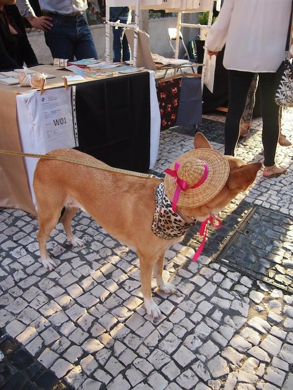 In ganz Porto ist der Hund / Hut los ...
