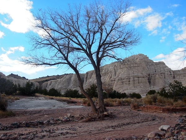 "I just love Steve's great sense of humour. Here, he points out one of his favourite photo motives to me: The lonesome tree in front of ""Plaza Blanca"" Rock Formations, standing right in the middle of a dried up riverbed."