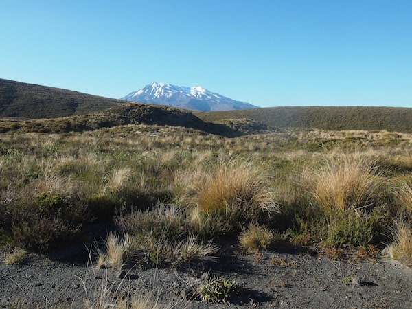 … takes you past landscapes such as this one, with Mount Ruapehu shining in the distance.