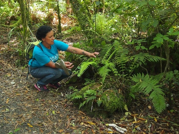 ... with Ngahuia teaching us in an interactive way, all there is to know about the local flora / fauna we watch ...