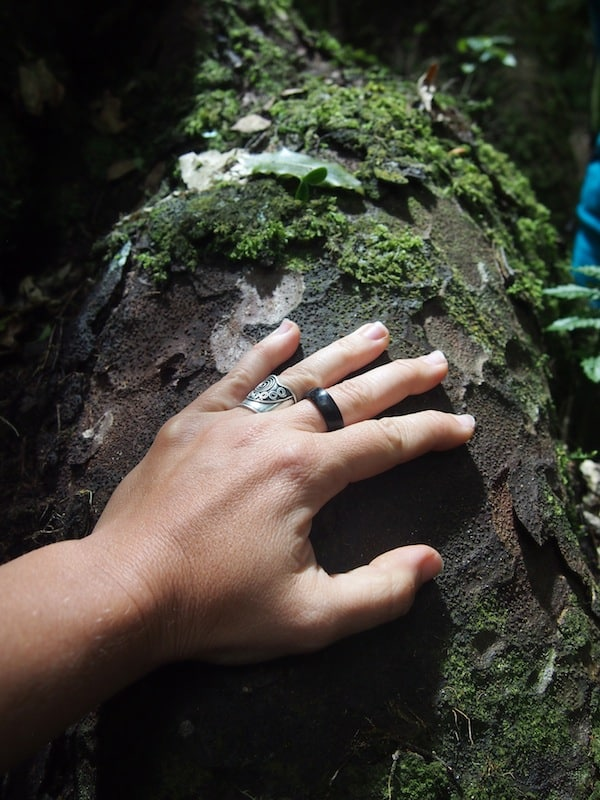 Or how about hugging one of the oldest trees in the forest, well over 1.000 years old?!