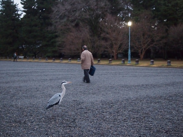 As Dannie and I make our way across the park of the former Imperial Residence, a heron – Japan's national symbol animal – casually crosses our path.