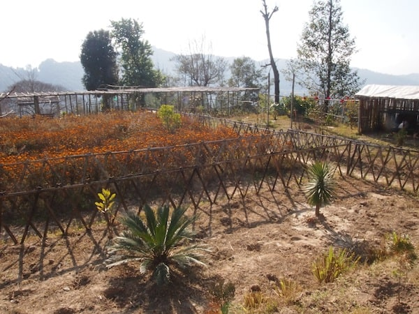 "We wander around Ujjwal's little farm garden, surprisingly warm and sun-kissed for my idea of ""winter"" ..."