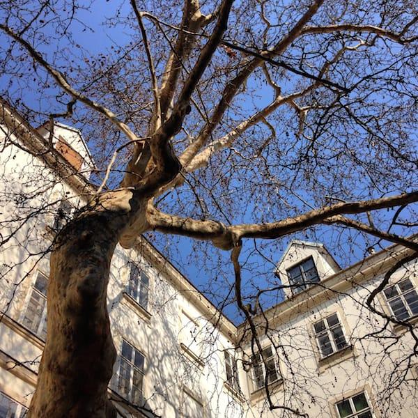 """Und diese wunderschöne """"Dame"""": Im Schutz der Bäume inmitten von Wien, steht diese Platane unter echtem Denkmalschutz!"""