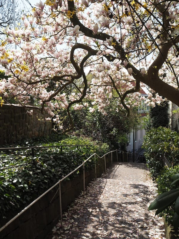 ... a moment of spring bliss in Blankenese ...
