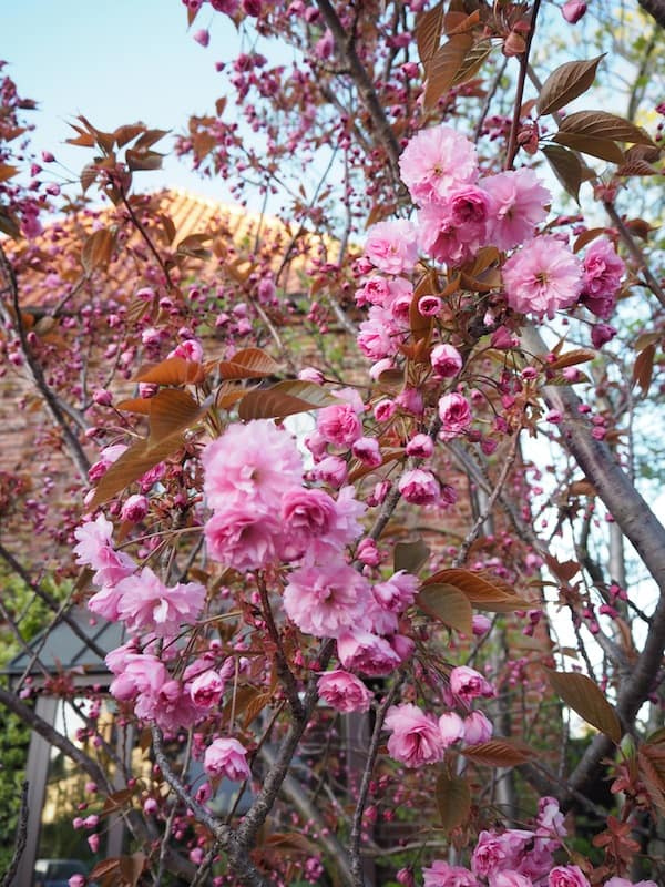 ... and spring flowers, a sense of romance hangs in the air.
