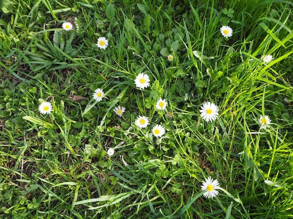 Das Gras lädt ein, Barfuß zu laufen ...