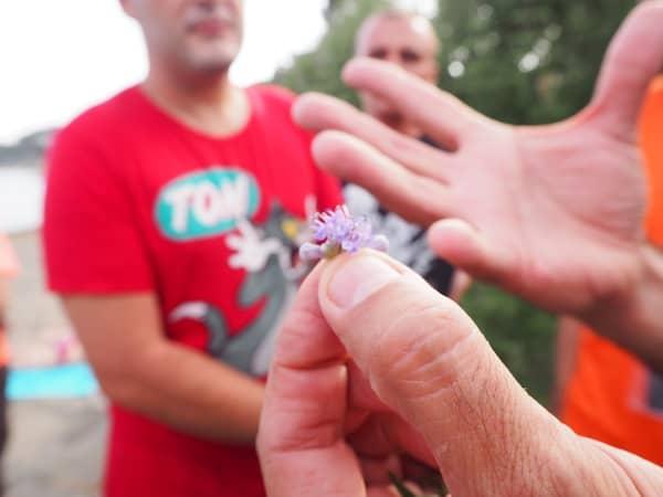 Winzig kleine Blüten werden nicht nur von der internationalen Topgastronomie geschätzt …