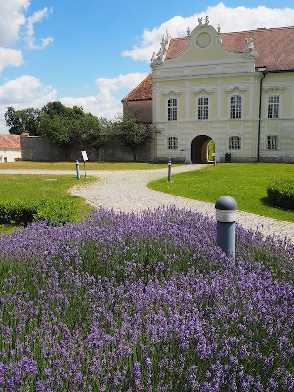 Die Lavendelfelder im Stift Altenburg lassen gleichzeitig vom Charme der viel weiter südlich gelegenen Provence träumen ...