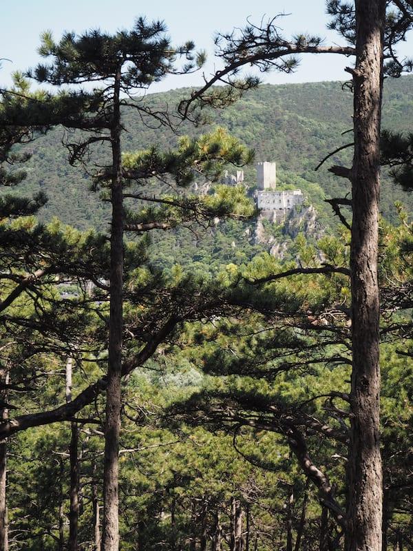 ... und betrachten dabei lieber einzigartige Ausblicke auf die Burgruinen des Wienerwaldes ...