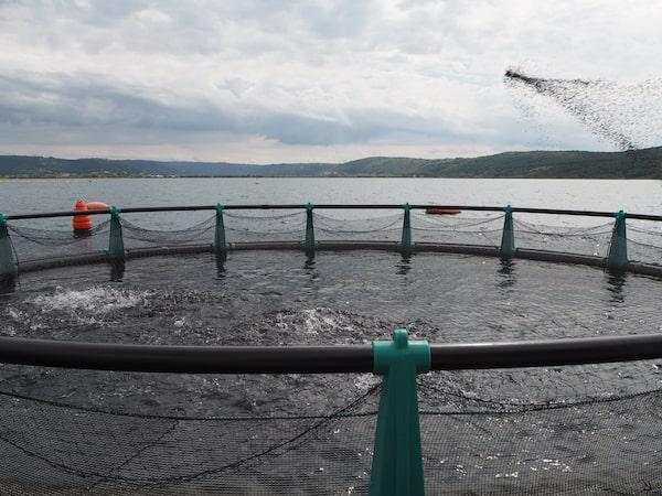"""… nimmt uns mit auf """"ihre"""" Fischfarm auf hoher See, wo gerade eine (recht spektakuläre) Fischfütterung (aus Biofutter, versteht sich) stattfindet ..."""