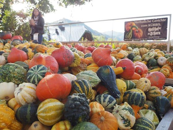 """... finden wir übrigens auch ein """"Kürbisparadies"""" vor, welches uns die Schönheiten der Jahreszeit Herbst in Erinnerung ruft."""