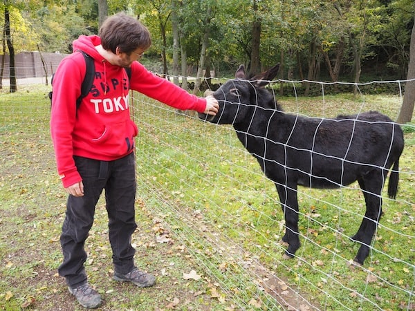 "… back to planet Earth, greeting ""El Burro Català"" - the Catalan donkey next doors."