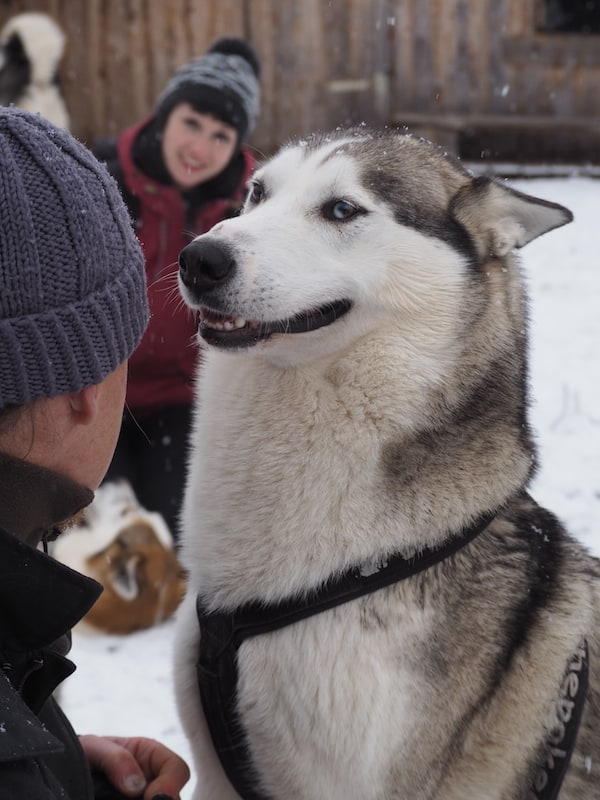 ... mit den mindestens ebenso neugierigen und gespannten Huskies geprägt.