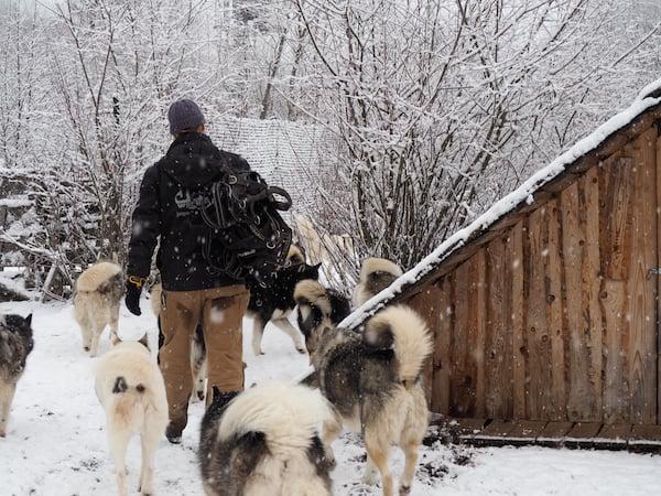 """Wenn selbiger zur Ausfahrt """"ruft"""" (die Hunde merken sowieso alles sofort) ..."""