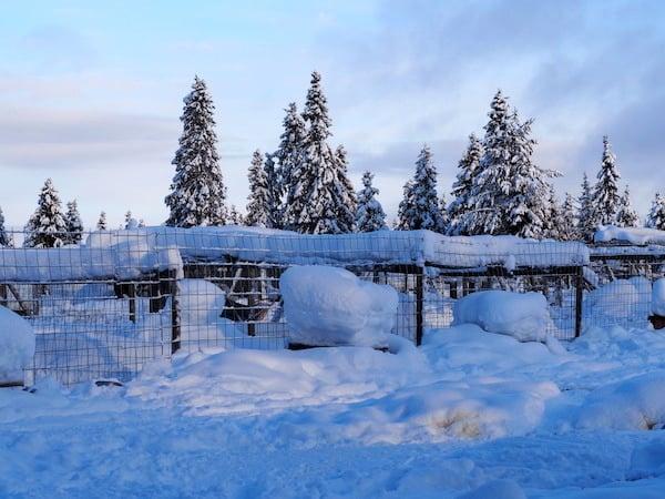 Huskyschlafgehege in Lappland.