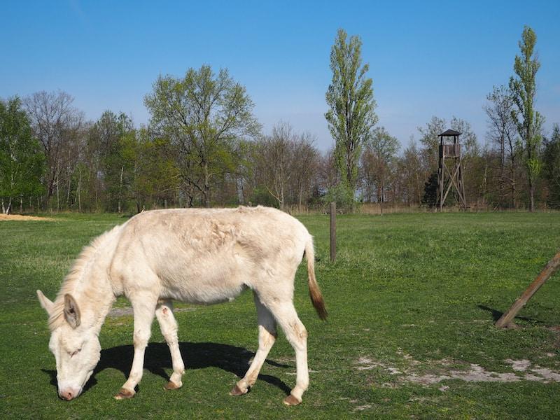... sowie natürlich der wunderschön Klassiker des Hauses: Die weißen Esel der Vila Vita Pannonia.
