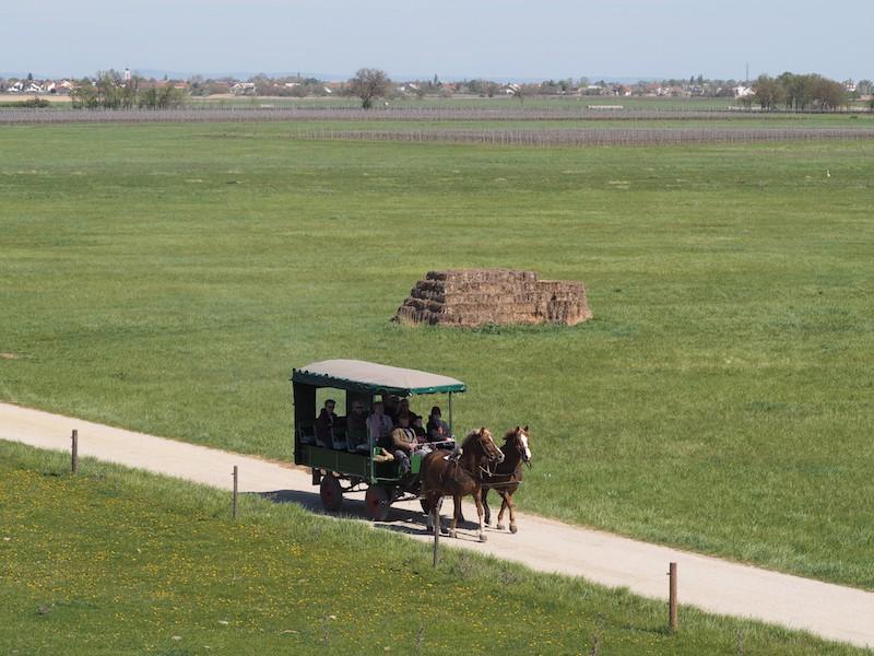 Hierher traben die Pferde ab dem kleinen Ort Apetlon ...