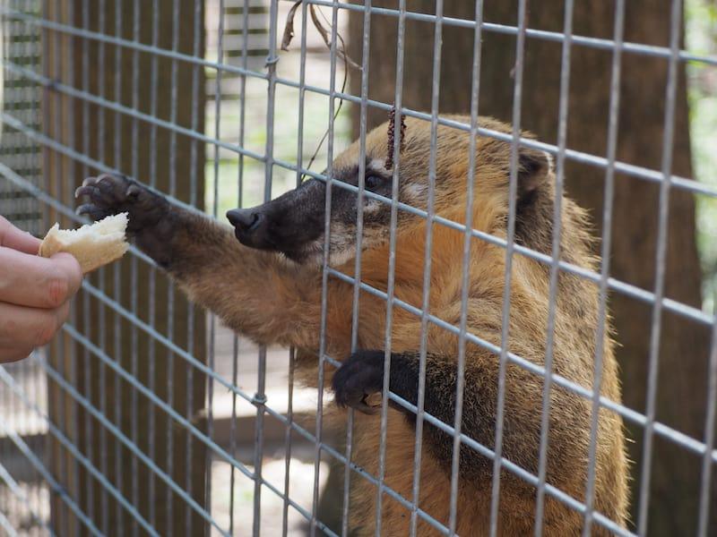 Die Fütterung der Tiere erfolgt nur nach Zutaten, die an der Kassa für Besucher verkauft werden ...