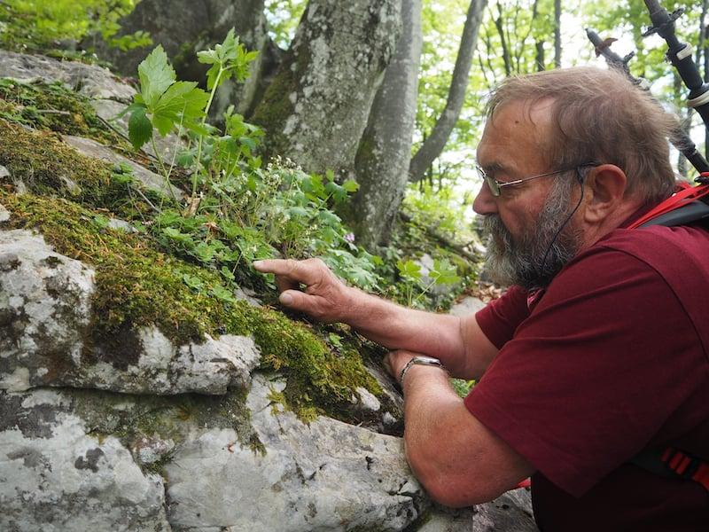 Und ringt sich gleichzeitig dazu durch, uns ungemein viel über die heimische Pflanzenwelt zu erklären - bis hin zu unvermuteten Waldorchideen entlang des Weges!