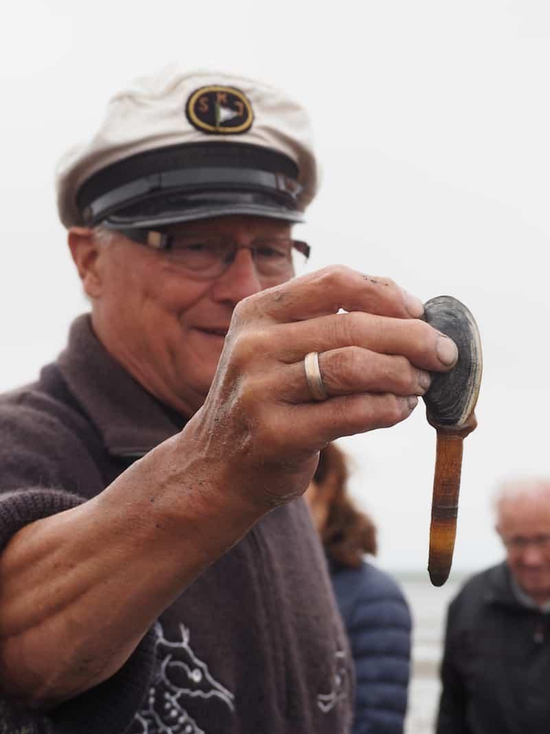 ... wenn der Wurm Lunge des Watt ist und den Wattenmeerboden durchlüftet, dann ist die hier von Heino ausgegrabene Sandklaffmuschel die Niere des Wattenmeer ...