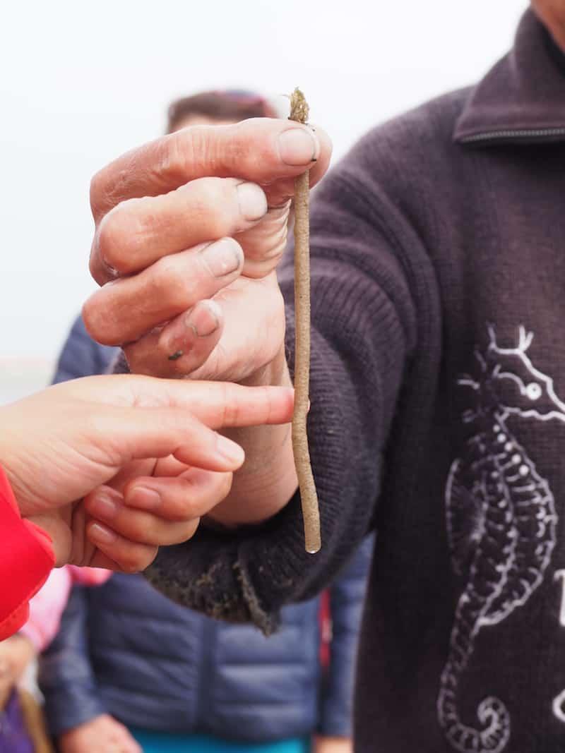 """Schon kurze Zeit später hat Heino übrigens einen für das Watt so typischen Sandpierwurm ausgegraben und zeigt uns hier die vom Wurm als Schutz gebaute """"Sandröhre"""" ..."""