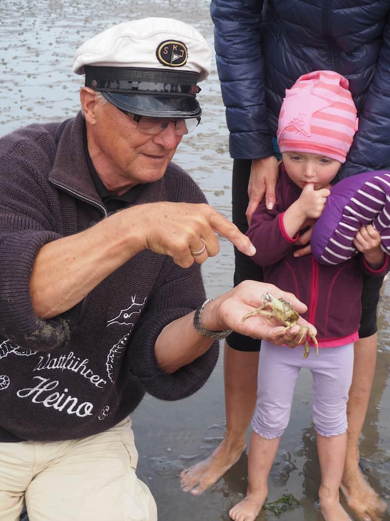 Sieh mal einer an, die seitwärts laufende Strandkrabbe hier! Die große Wattenmeerführung mit Heino Behring ist einzigartig, ich empfehle Euch unbedingt, an selbiger teilzunehmen, um mehr über das Wattenmeer zu erfahren und seine besondere Ökologie und Bedeutung für die Region zu verstehen.