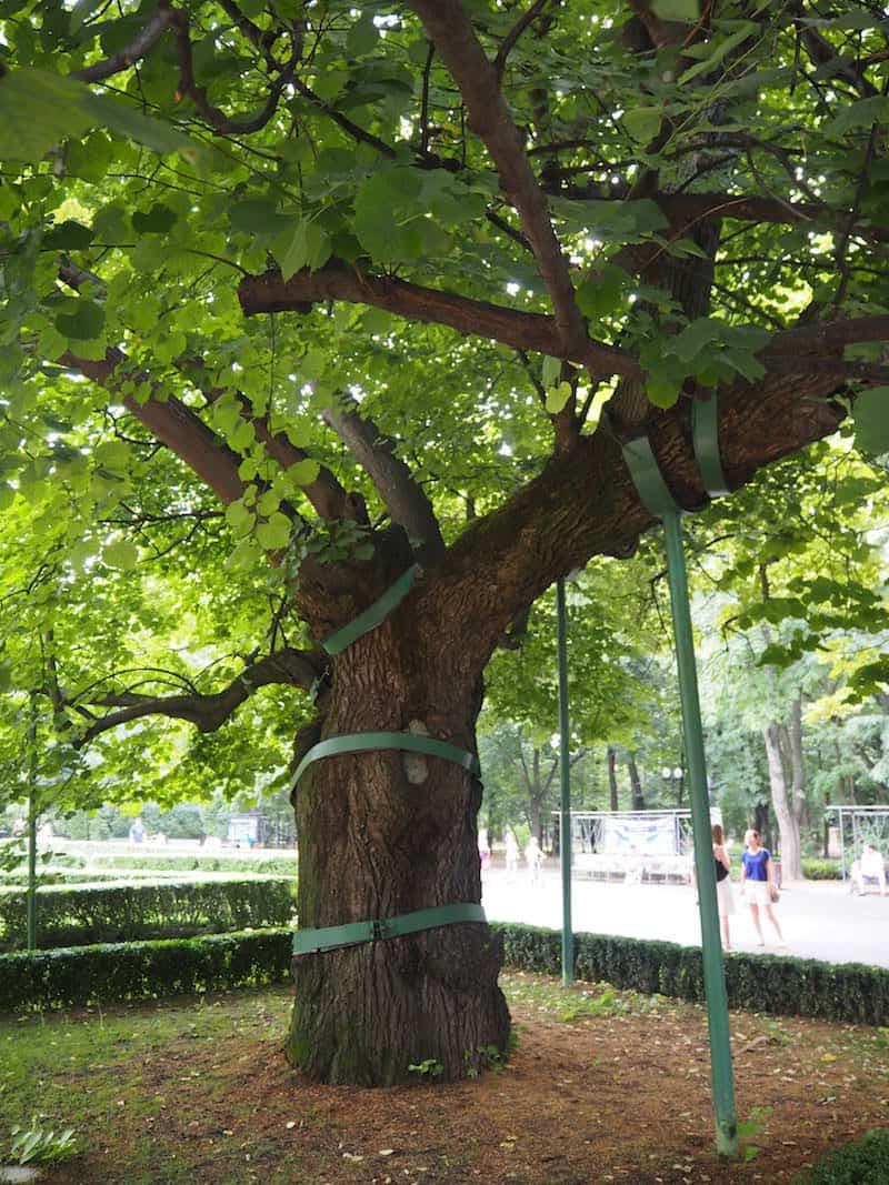 ... und hier heißt es bei einem Eis in der Mittagssonne Rast machen: Unter diesem Baum hat sich der berühmte rumänische Dichter Georg Eminescu zu seinen romantischen Versen hinreißen lassen.