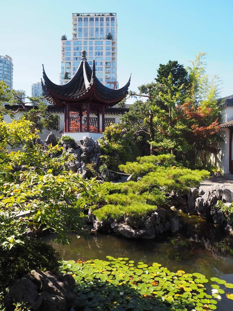 ... ist in den Chinesischen Gärten von Vancouver bestens aufgehoben ...