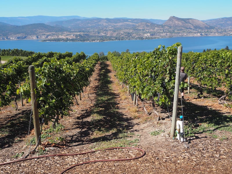… boasting beautiful views and encouraging its just over 40 family-run wineries there to diversify into new offers, such as weddings and restaurants, as one way to offset a part of the cost of doing business …