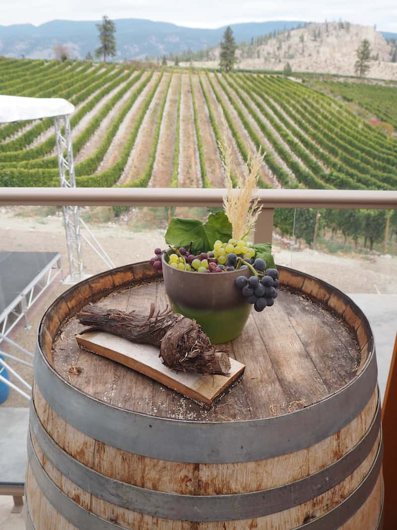 … found at a place called Wild Goose Winery : Gewürztraminer and Riesling since 1983, the oldest plantations for these grape varieties in the valley.