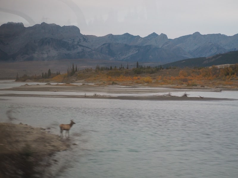 From watching the odd moose, bear (!) or eagles from the train ...