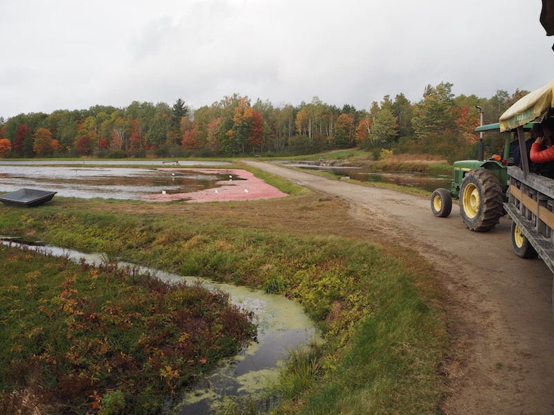 ... and go for a ride with the tractor, teaching us more about the way cranberry fields are farmed and harvested.