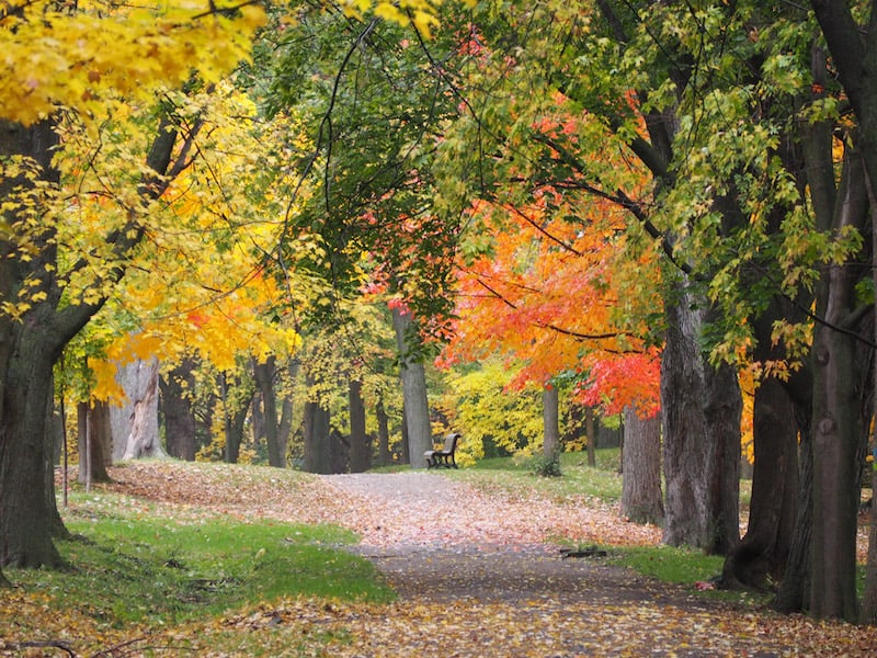 ... or enjoy that mind-bogglingly beautiful walk through nearby Mont Royal Park ...