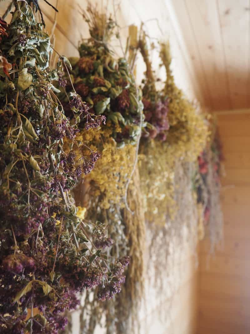 Welcome to the wonderful aromas of dried herbs & flowers at the sauna ...